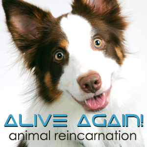 Alive Again pet podcast & radio show