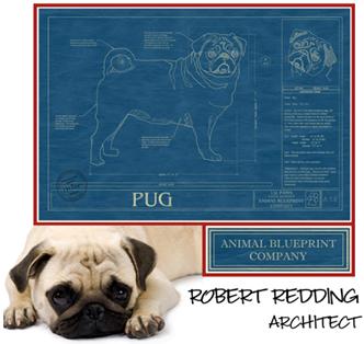 Decorating tails blueprints for a designer dog the animal animal blueprint company on pet life radio malvernweather Gallery