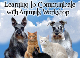 Animal Communication Workshop