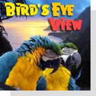 pet podcast - Bird's Eye View - Parrots & Birds