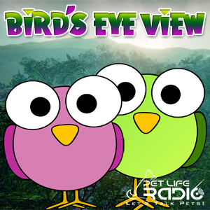 Bird's Eye View pet podcast & radio show