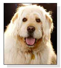 Bocker T Labradoodle on Pet Life Radio
