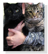 Adopt Danny & Eugene Today!