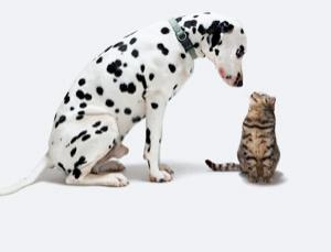 Μπορεί ένας σκύλος να ζήσει μαζί με μία γάτα;