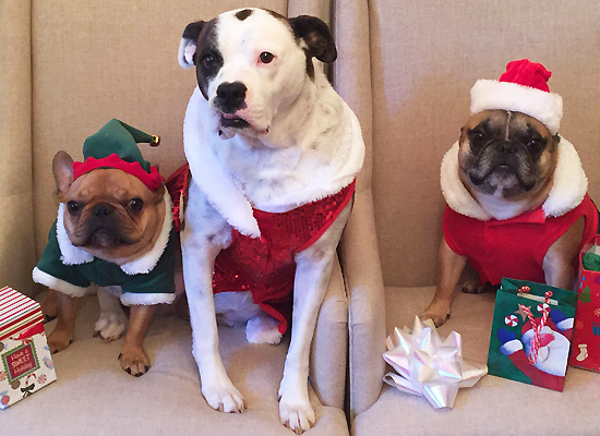 A Doggone Good Guide for Holiday Eating on Pet Life Radio