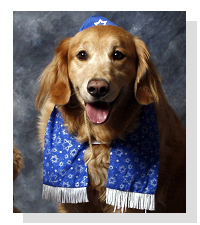 Happy Hanukkah from Pet Life Radio