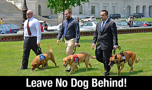 Leave No Dog Behind on Pet Life Radio