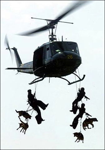 Military Dogs on Pet Life Radio