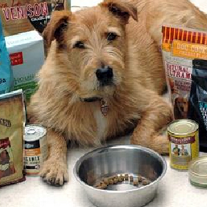 P.M.S. - Pet Marketing Strategies for the Petpreneur  on Pet Life Radio