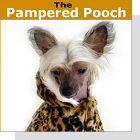 pet podcast - The Pampered Pooch - It is a growing trend that people love and treat their pets like they are their children.