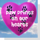 pet podcast - Paw Prints On Our Hearts