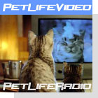 pet podcast - PetLifeVideo