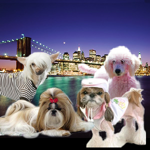 Pets In The City on PetLifeRadio.com