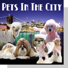 pet podcast - Pets In The City - Pets in New York