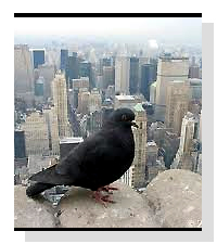 Pigeons   on Pet Life Radio