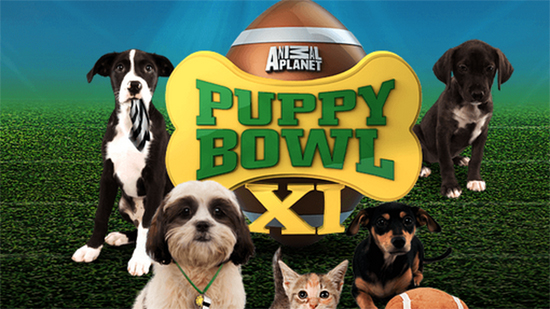 Puppy Bowl on Pet Life Radio