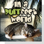 pet podcast - In A Purrfect World