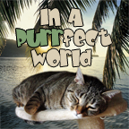 In A Purrfect World - a perfect world for cats on Pet Life Radio (PetLifeRadio.com)