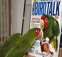 Ratchet admiring her picture on the cover of August 2007 Bird Talk magazine