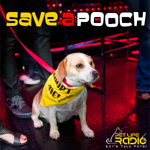 Save A Pooch pet podcast & radio show