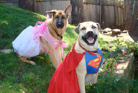 Super Heroes on Pet Life Radio