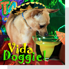 pet podcast - Vida Doggie-  All about latin animals and pets