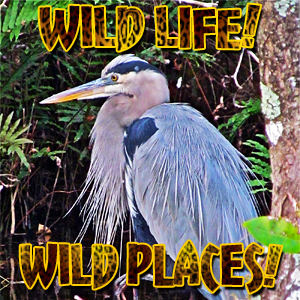 Wild Life! Wild Places! pet podcast & radio show