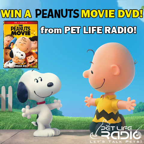 Win a Peanuts Movie DVD from Pet Life Radio!