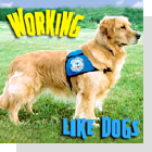 pet podcast - Working Like Dogs -  All about service dogs