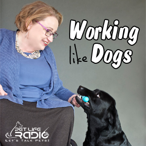 Working Like Dogs pet podcast & radio show