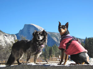 Dogs in Yosemite National Park on Pet Life Radio