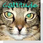 pet podcast - Cattitude-Cats as pets