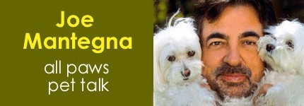 Joe Mantegna & Pets