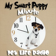 My Smart Puppy pet radio and podcast