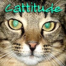 Cattitude cats radio and podcast