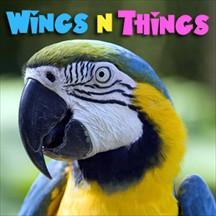 Wings 'n Things pet radio and podcast