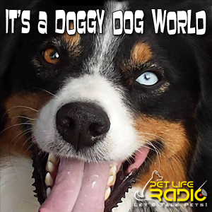 It's a Doggy Dog World pet podcast & radio show