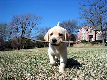 My Smart Puppy Minute - Fetch on Pet Life Radio