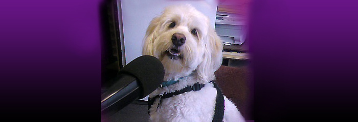 All Paws Pet Talk on Pet Life Radio