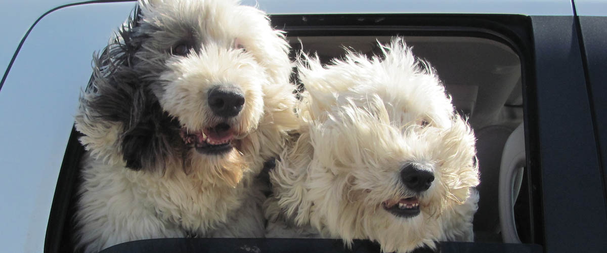 On the Road with Mac & Molly on Pet Life Radio