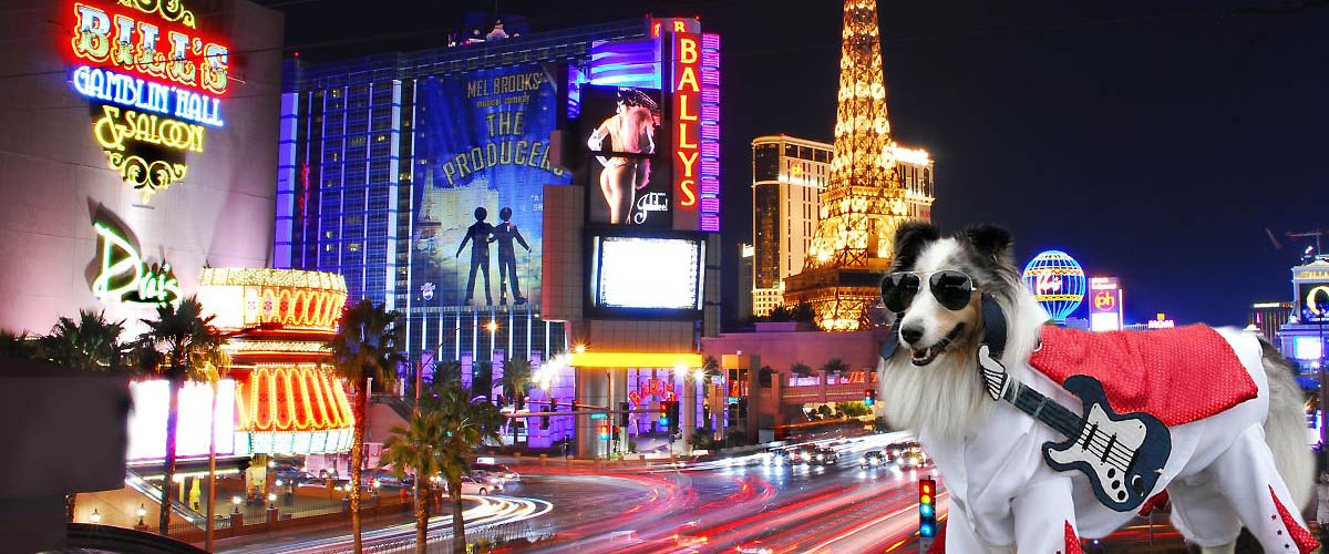 Vegas Rock Dog Radio Show on Pet Life Radio