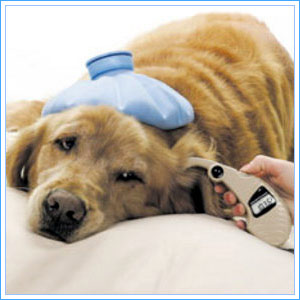 The Pet Doctor, Your Pet Health Matters on PetLifeRadio.com