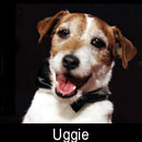 Uggie on A Super Smiley Adventure  on Pet Life Radio