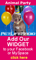Get the Animal Party Widget for your MySpace, Blog or Facebook!