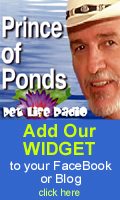 Add the Prince of Ponds widget to your Facebook or Blog!